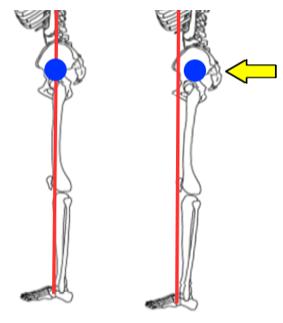 骨盤と重心